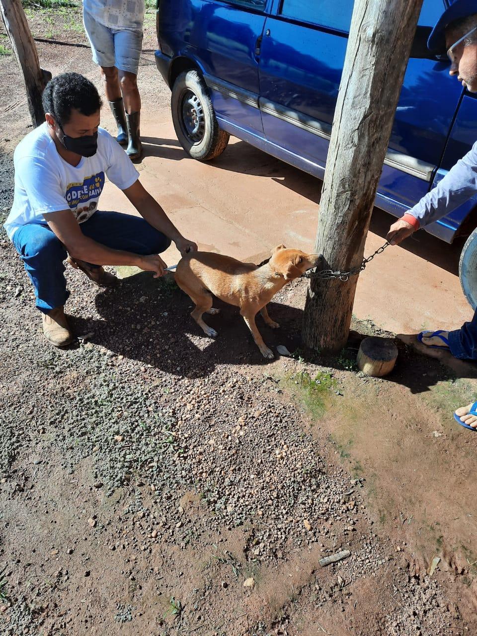 Secretaria de Saúde através do Departamento de Zoonoses está imunizando animais das espécies felinos e caninos para erradicar a doença Raiva em todo o município